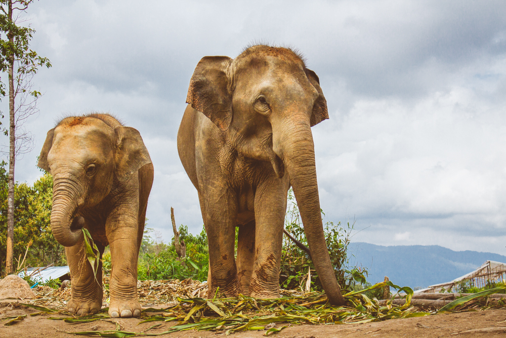Travel photography Chiang Mai Thiland Elephant Sanctuary